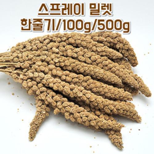 스프레이 밀렛 한줄기/100g/500g
